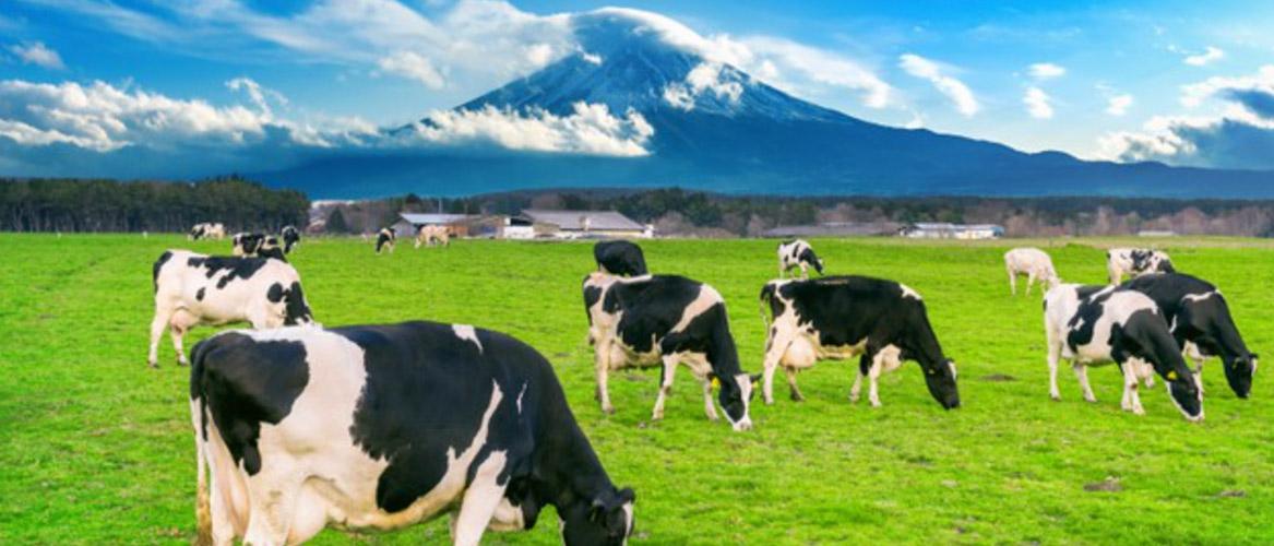 畜産による社会的課題